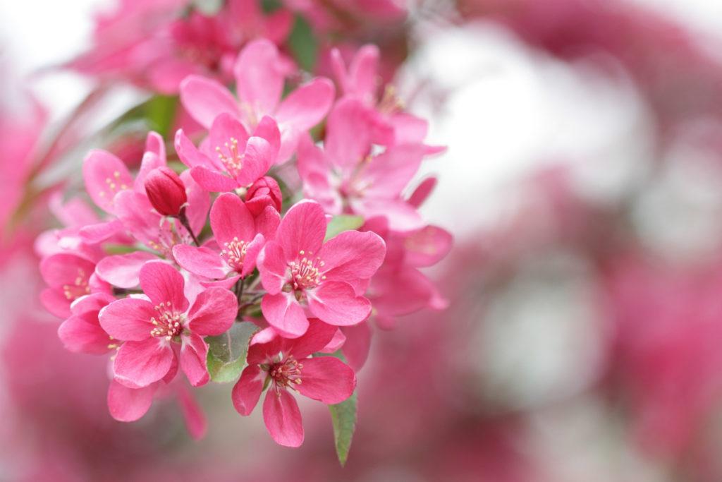 edmonton-tree-pruning